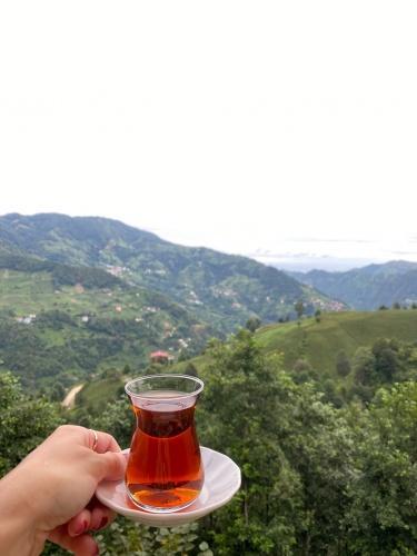 ...Trabzon'da çay tarlası gezme fırsatı da bulduk. Çayın nasıl toplandığını ve işlendiğini gördük. Bir sonraki gün tatilimize ise Rize Zilkale ile başladık.