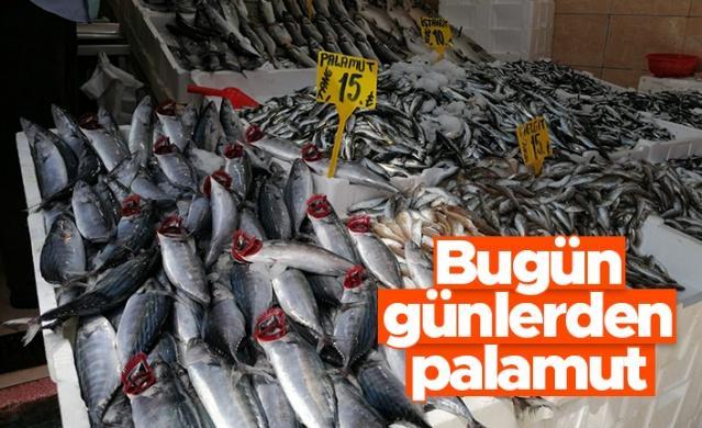 Balıkçıların ve vatandaşların yolunu gözlediği palamut, bugün sürpriz yaptı. Kasa kasa palamutlar tezgahları süsledi. Palamut bollaşınca yarım kiloluk palamutlar 15 liradan satıldı.