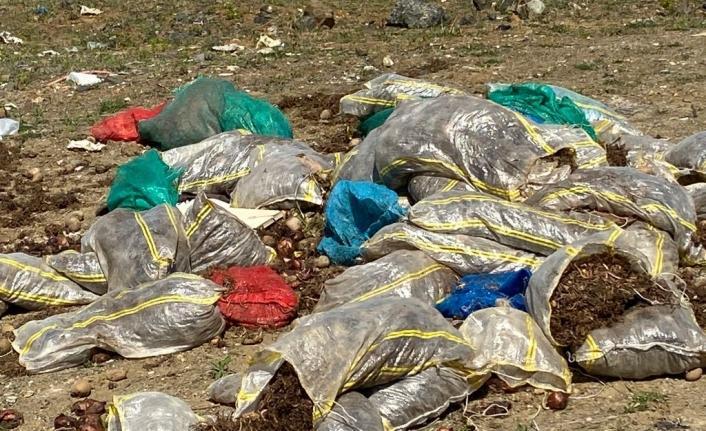 Trabzon sahilde çürük patates soğan çuvalları çıktı