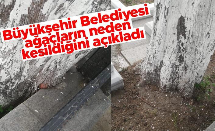 Trabzon Büyükşehir Belediyesi Sülüklü Mezarlığında ağaç kesiminin sebebini açıkladı