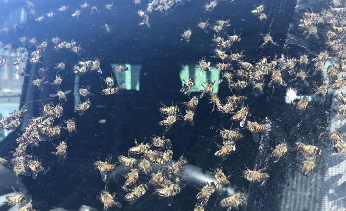 Hareket halindeki araçta arı kovanı devrildi