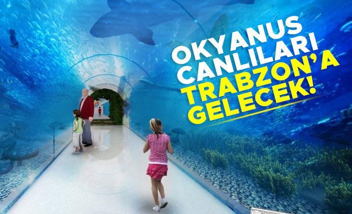 Okyanus canlıları Trabzon'a gelecek!