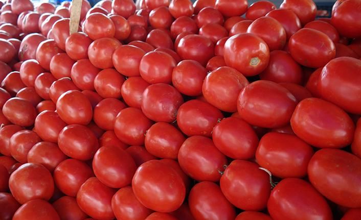 Kışlık konserve kurmak isteyenler dikkat - Tarla domatesi sezonu açıldı