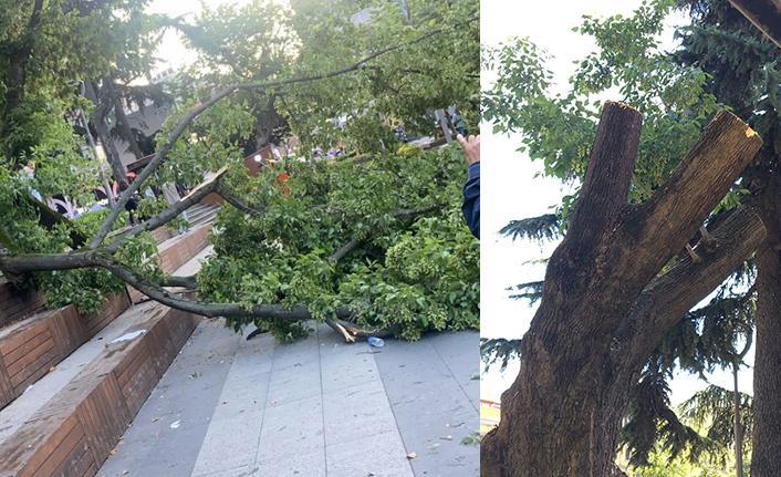 Trabzon Meydan'da ağaç devrildi