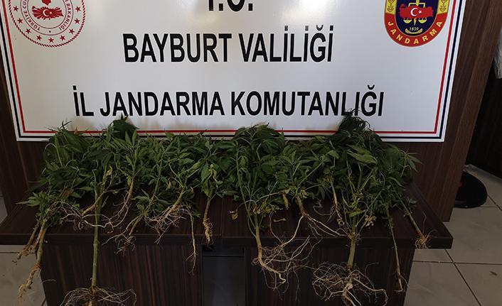 Bayburt'ta bir miktar kenevir ele geçirildi