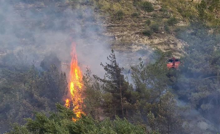 Karabük'te ormanlık alanda yangın çıktı