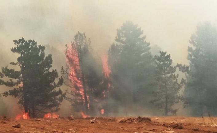 Muğla'da dört ilçede yangınlar devam ediyor