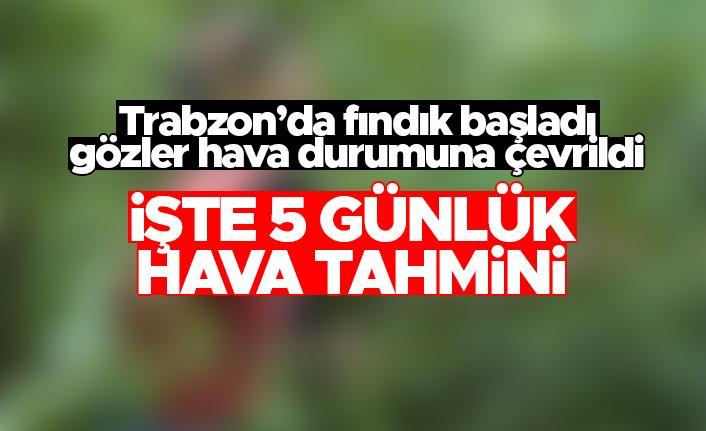 Trabzon'da fındıkçılar dikkat - Yağmur bekleniyor...
