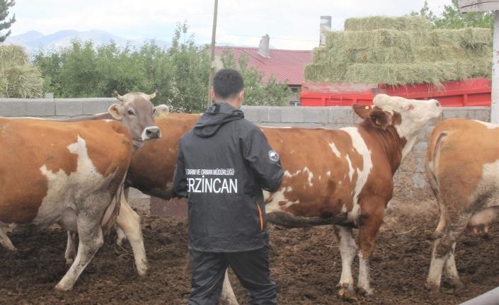 """Erzincan'da """"zoonoz"""" hastalıklar ile mücadele devam ediyor"""