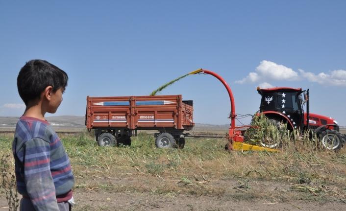 Kars'ta mısır sılajı hasadı başladı