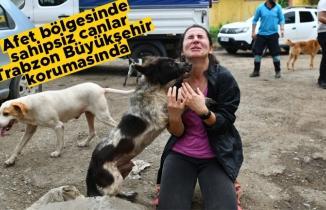 Afet bölgesinde sahipsiz canlar Trabzon Büyükşehir korumasında